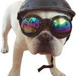 Equipement moto chien