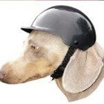 équipement moto pour chien