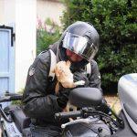 équipement moto chien