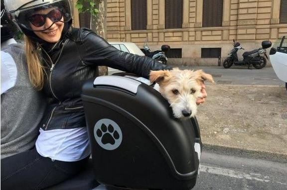 Equipement moto pour petit chien